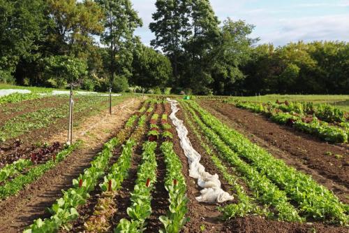 PVF Farm Field